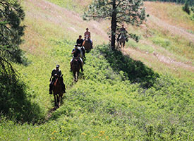 Make sure to read our Things to Know section to help you have a fun horsebackriding experience with Okanagan Stables.