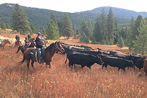 Want to have a mini CITY SLICKERS type of  experience? Join us for a day cattle drive for great fun and great memories!